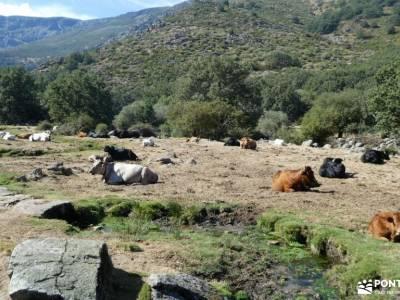 Sierra de Gredos; Barco Ávila; grupos de senderismo en madrid gratis excursiones senderismo madrid c